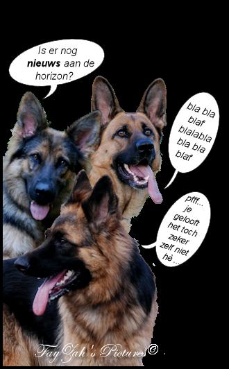 gefeliciteerd duitse dog